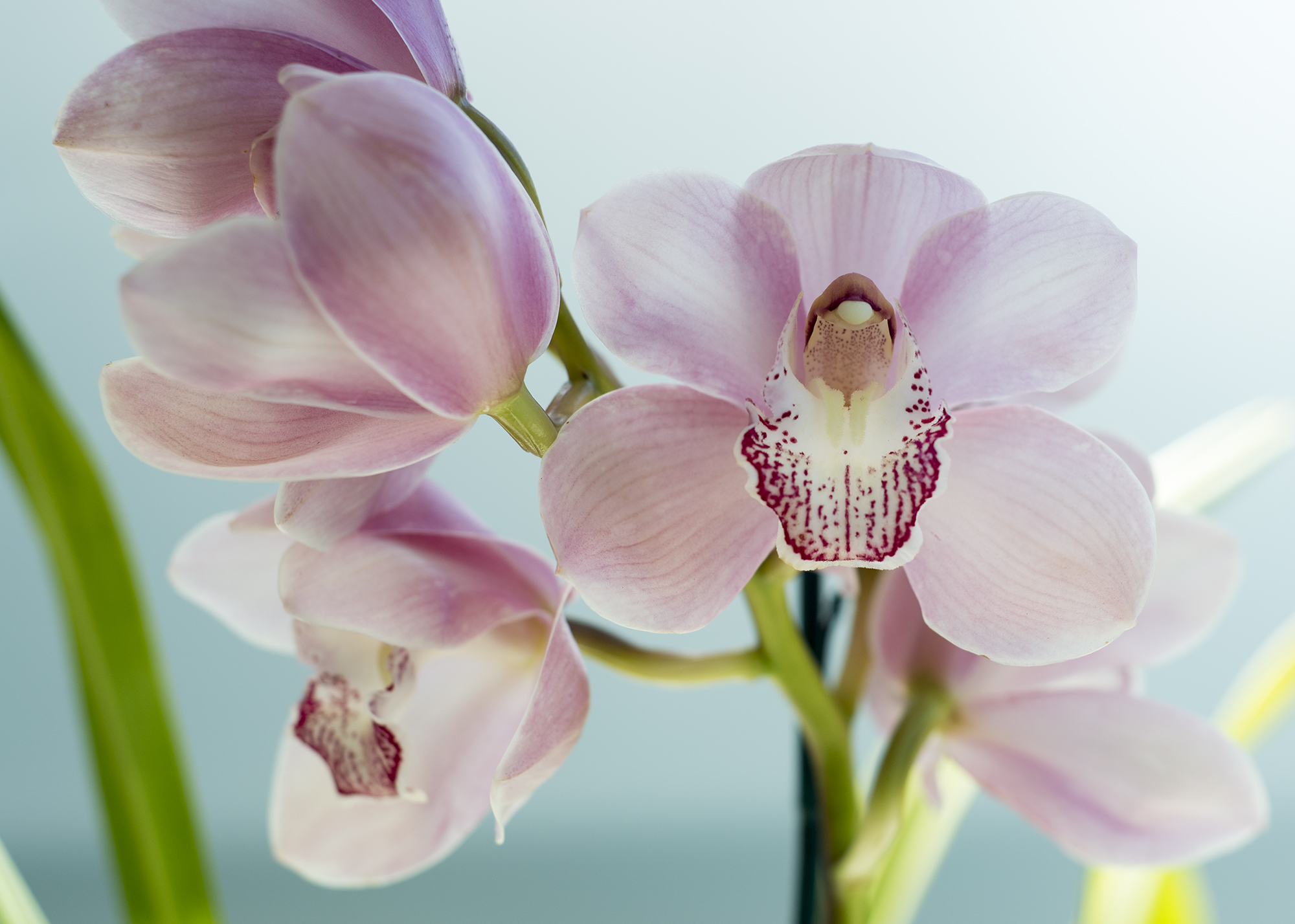Delmarre Design product photography - Orchid2